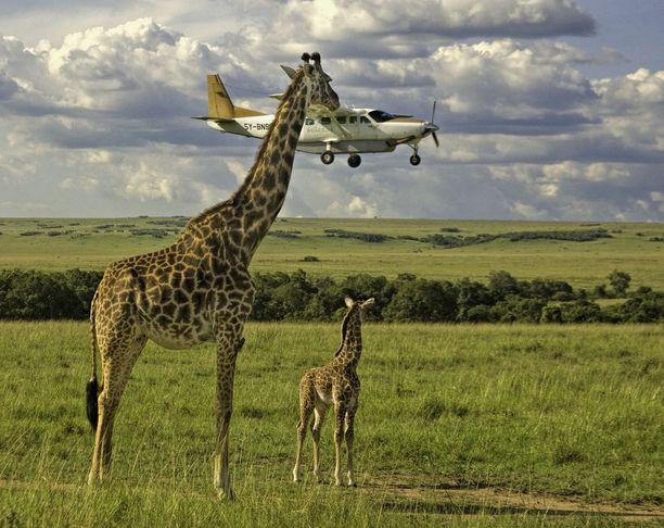 Graeme Guyn ottama kuva on todella hieno. Siinä on kirahvi, vasa ja lentokone.