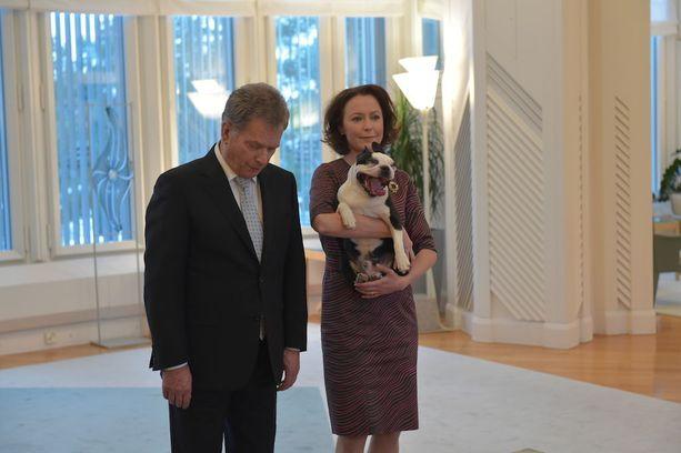 Lennu-koira on Saulin ja Jennin lemmikki - ja maailmanlaajuinen julkkis.