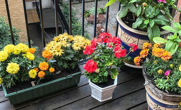 Tärkeintä on, että kasvit näyttävät vehreiltä, runsailta ja hyvinvoivilta.