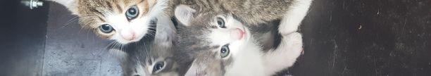 Kiikoisten löytöeläinpalvelu ottaa vastaan noin 400 kissaa vuosittain.