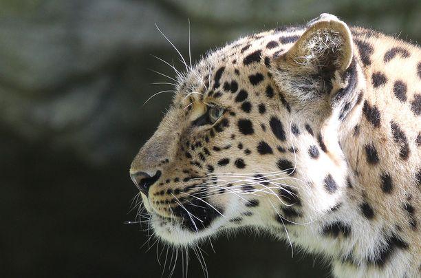 Krugerin kansallispuiston tiedottajan mukaan eläimet karttavat yleensä ihmisten seuraa.