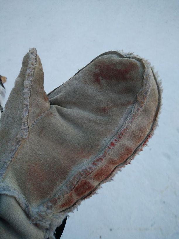 Tuulian hanska oli veressä koirien tappelun jäljiltä.