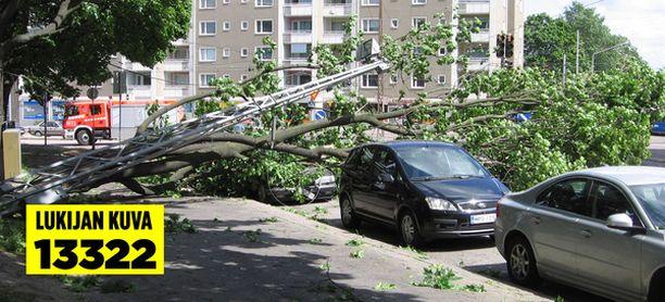 Korkea puu kaatui autojen päälle keskelle katua.
