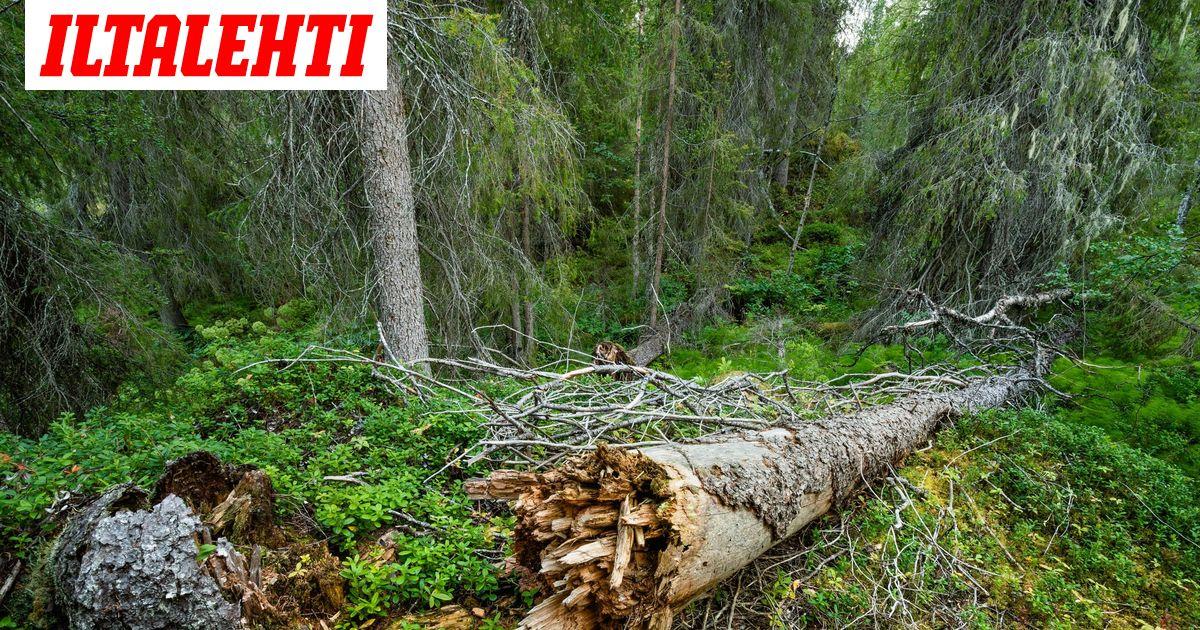 Suomi ja yli 60 maata sitoutuvat suojelemaan luonnon...
