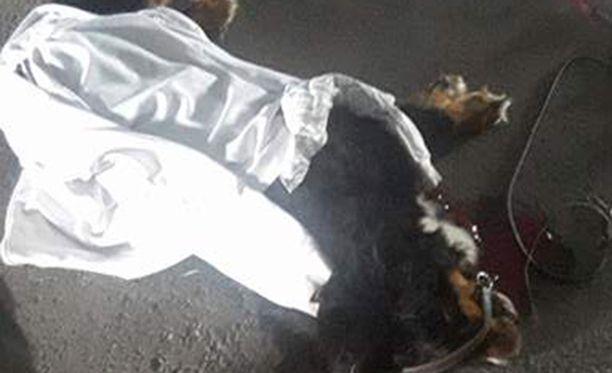 Vantaalaisperheen lemmikkikoira kuoli maanantaina mopoilijan ajettua vauhdilla suurta berninpaimenkoira Federeriä päin.