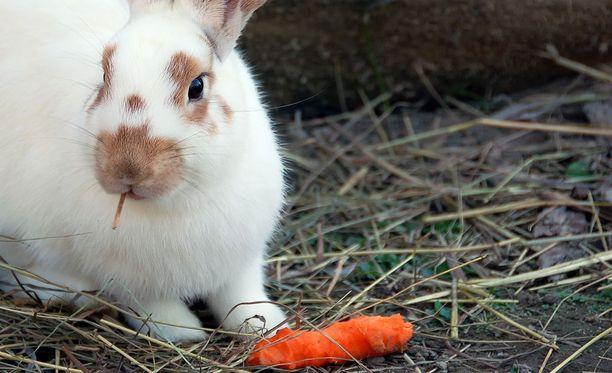 Käräjäoikeus tuomitsi perheenisän eläinsuojelurikoksesta 240 euron sakkoihin. Kuva ei liity tapaukseen.
