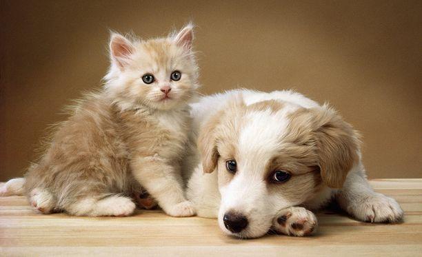 """Professori Zak pitää hämmästyttävänä sitä, että koirat välittävät """"väärän"""" lajin yksilöistä, ihmisistä."""