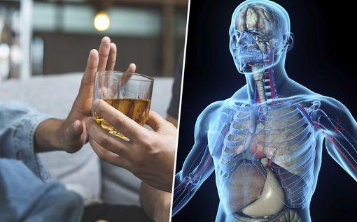 Tissuttelu vaarantaa terveyden – nämä 10 asiaa tapahtuvat, kun lakkaat juomasta