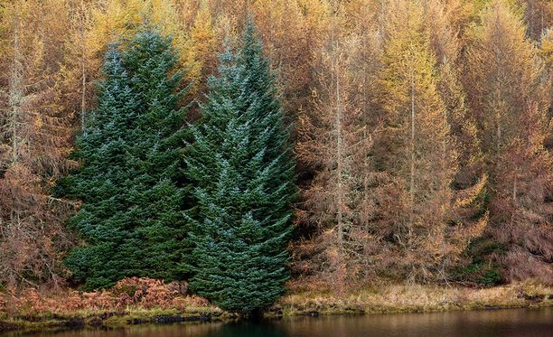 Puut pystyvät kommunikoivat keskenään muun muassa siitä koska kannattaa pudottaa lehdet.