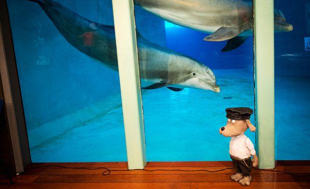 Särkänniemi käyttää Long Playn mukaan eläintarhaluvan perusteena tutkimusta, mutta ei oikeasti tee tutkimusta.