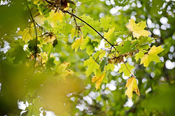 Lokakuu on alkanut tavallista lämpimämmissä merkeissä, mutta viikko päättyy viileämmässä säässä.