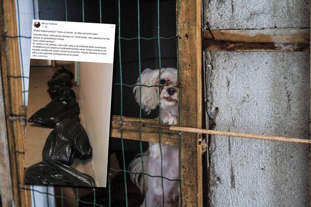 Eläsuojeluneuvoja kertoi pakanneensa kuolleita koiria jätesäkkeihin. Kuvan valkoinen koira ei liity tapaukseen.