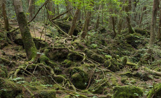 Aokigaharan metsä on maailman tunnetuimpia itsemurhapaikkoja.