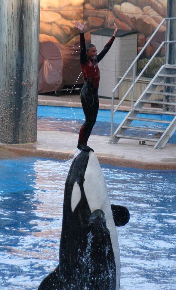 Dawn yritettiin pelastaa altaasta muun muassa verkkojen ja Tilikumille heitettyjen kalojen avulla. Mitään ei kuitenkaan ollut tehtävissä.