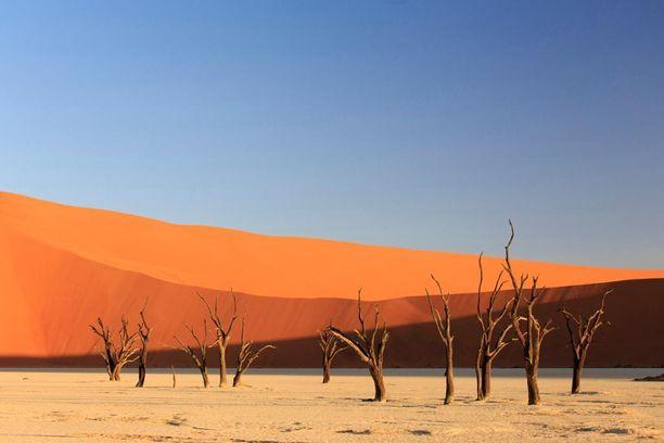 Namib-Naukluftin kansallispuisto