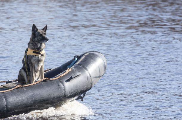 Ruumiskoira antoi merkin laiturin lähellä, mutta kadonnutta ei löydetty sukeltamalla. Kuvan koira ei liity tapaukseen.