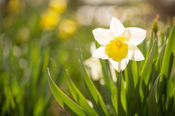 Koko Suomessa saadaan nauttia kauniista kevätsäästä.