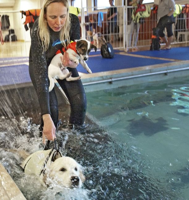Tuovi Ahola totuttaa Onnia ja Ricoa veteen koirahoitola Onnenkoirassa.