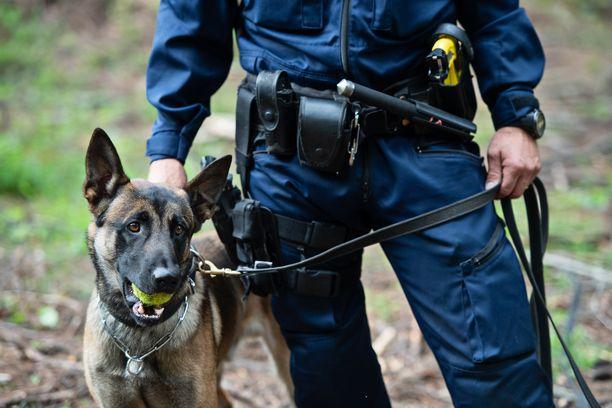 Poliisikoira puri sivullista Hämeenlinnassa. Kuvan koira ei liity tapaukseen.