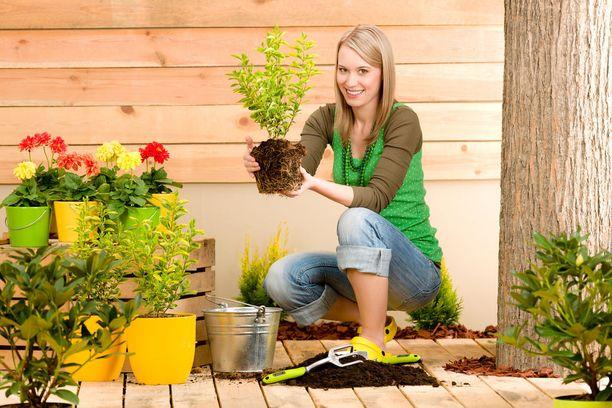 Piha & partsi -erikoislehdestä saat vinkkjeä myös kukkatarhan ja kasvimaan perustamiseen.