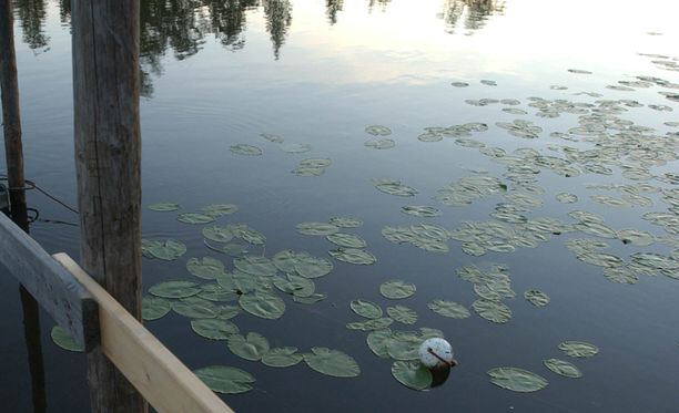 Kokemäen kaloja ei suositella syötäväksi. Kuva vuodelta 2004.