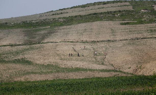 Maanviljelijöiden maissipellot ovat kärsineet pahasta kuivuudesta Etelä-Hwanghaessa Pohjois-Koreassa.