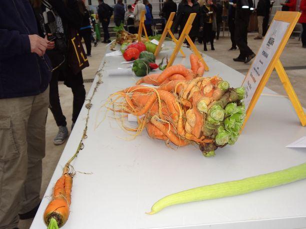 Mika Tiilikainen kasvatti painavimman ja pisimmän porkkana.