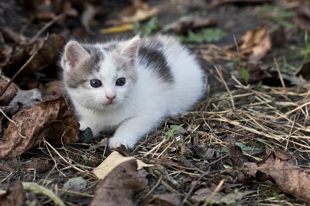 Tunnistusmerkintä ja rekisteröinti tulee pakolliseksi myös kissoille.
