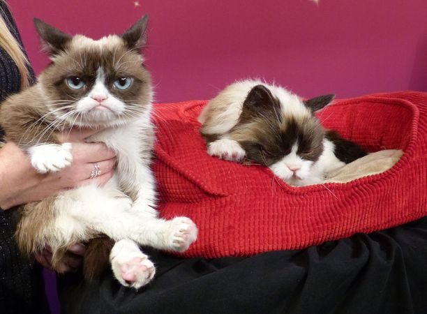 Grumpy cat eli Tardar Sauce Madame Tussaun vahakabinetissa San Franciscossa vuonna 2015.