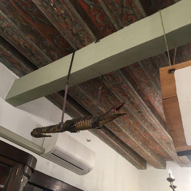 Koristeellisessa vanhassa katossa roikkuu täytetty krokotiili. Niitä tai erikoisia täytettyjä liskoja näki usein keskiaikaisissa apteekeissa. Eläinten avulla haluttiin osoittaa apteekkarien hallitsevan muinaista viisautta.