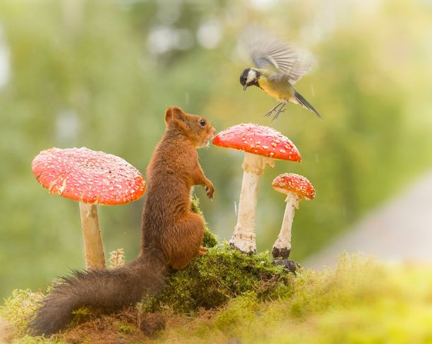 Oravan ja linnun tapaaminen meni mukavasti.
