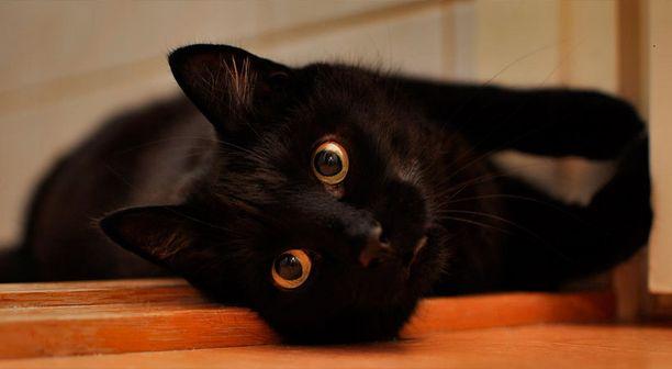 Leevi, Minni ja Saara muuttivat Torssoselle pentuina. Kissat ovat tottuneet valokuvattavana oloon.