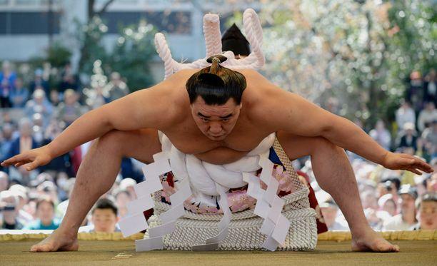 Harumafuji Kohei ylennettiin sumopainin suurmestariksi, yokozunaksi, syyskuussa 2012. Hän oli järjestyksessään lajin historian 70. yokozuna.