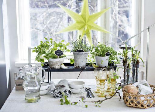 -Jos kotona sattuu olemaan keväisen vihreä tähti, sen voi ottaa osaksi pääsiäissisustusta, sanoo Leena Airikkala.