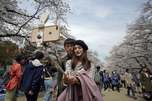 Nuori pariskunta ikuistaa kirsikankukat selfie-kuvaansa.