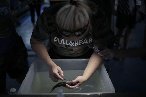 Eugene Ng laskuttaa yhdestä kalan kauneusleikkauksesta noin 100 euroa.