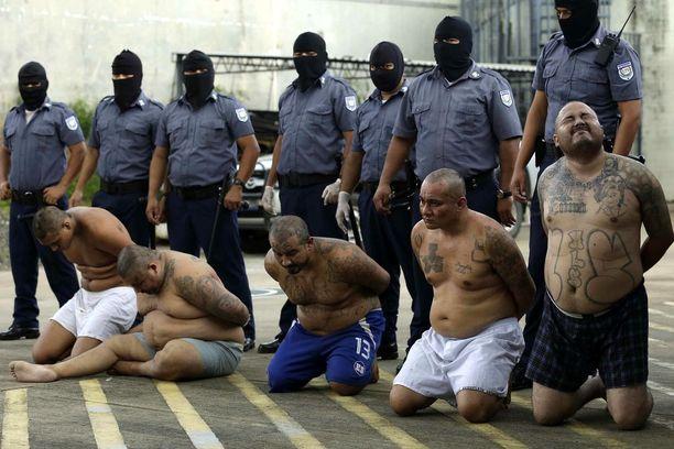 Viisi vangittua Mara Salvatruchan johtajaa El Salvadorissa tämän kuun 12. päivä. Heitä syytetään yli 200 murhan tilaamisesta syyskuun ja lokakuun taitteessa.