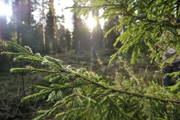 Metsän tuotto on suurinta viljavilla Etelä-Suomen metsämailla, jotka sijaitsevat lähellä tehtaita.