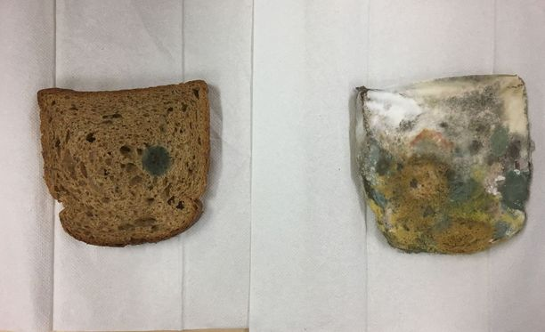 Vasemmalla olevaa leipäviipaletta ei kosketeltu, oikealla oleva leipäviipale kulki oppilailla kädestä käteen ennen muovipussiin laittamista.