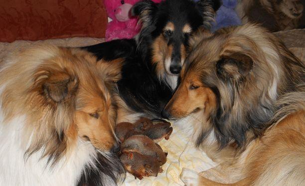 Sijaisemot Myy, Nasu ja Hoppu pitävät yhdessä oravanpoikasista huolta.