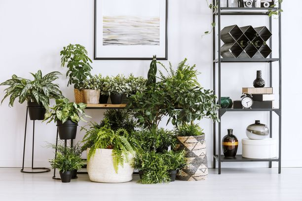 Itse tehty miniviidakko tuo vihreyttä kotiin kunnon kevättä odotellessa.