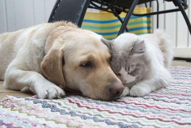 Kissa voi oppia paljolti samoja asioita kuin koira.