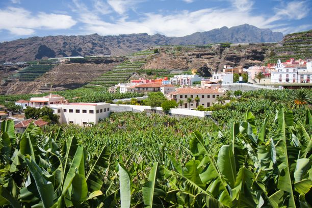 Vehreällä La Palmalla viljellään maata. Kuvassa banaaniviljelmä.