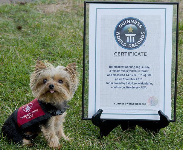 Lucyn saama Guinness-diplomi on haltijaansa suurempi.