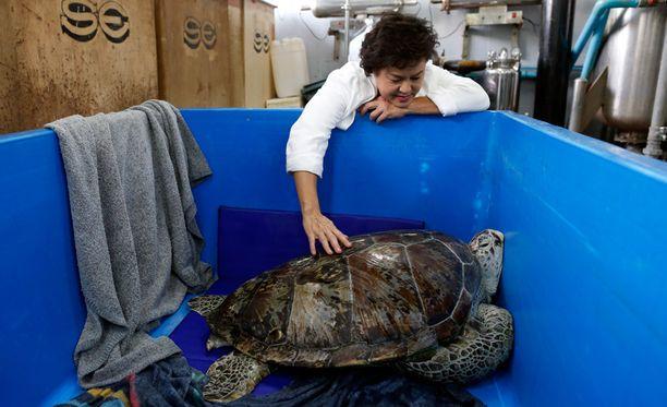 Kilpikonnan ruuansulatuselimistöstä poistettiin viisi kiloa kolikoita seitsemän tuntia kestäneessä leikkauksessa.