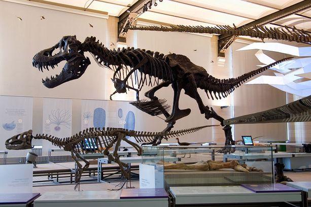 Brysselin luonnontieteellinen museo on ehdoton matkakohde dinosaurusfanille.