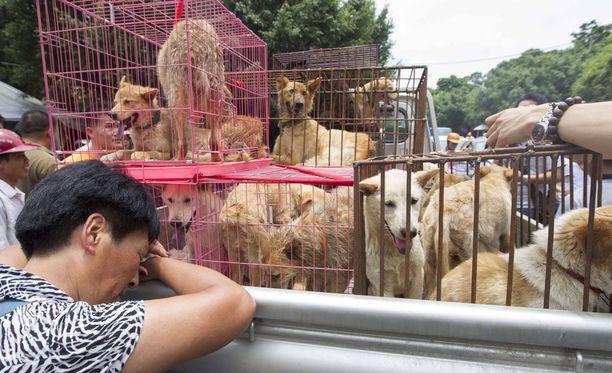 Useissa Aasian maissa koiria syödään. Kuvituskuva on Kiinasta.