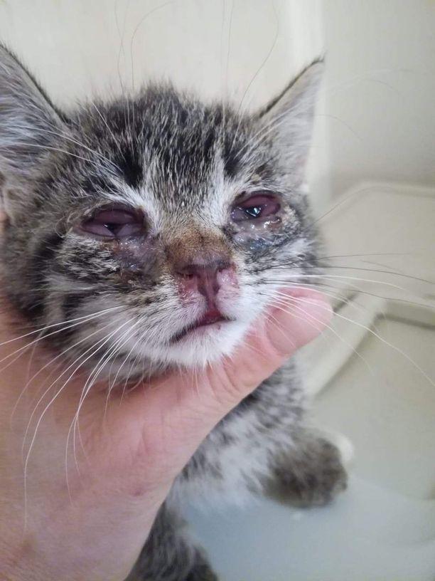 Kissoja kohdellaan edelleen Suomessa huonosti. Anu Lehtiö on todistanut useita sydäntä särkeviä tapauksia. Kuvan huonokuntoinen kissanpentu kuvattiin viime kesänä.