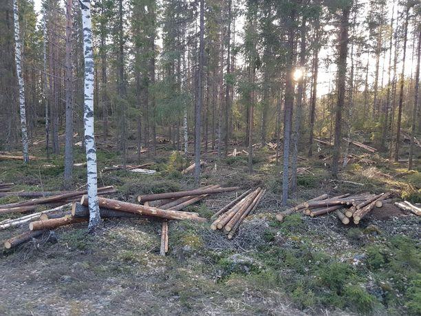 Suomen metsistä hakattiin viime vuonna puuta 72,4 miljoonaa kuutiometriä.