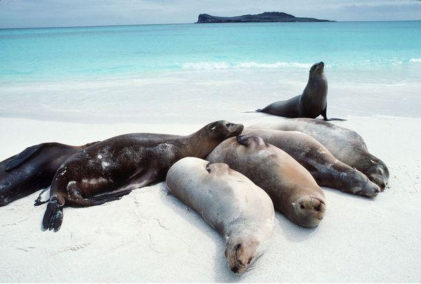 Galapagossaarten luonto ja rannat kärsivät, kun saarille saapuu ihmisten myötä vieraita lajeja.